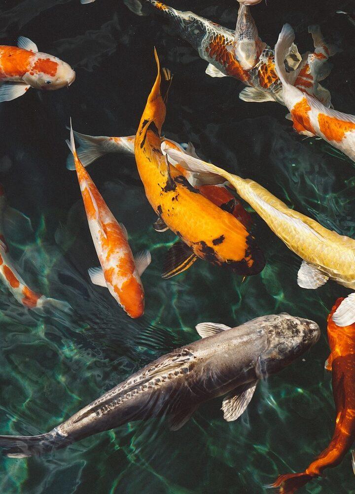 Czy ryby mają uczucia?