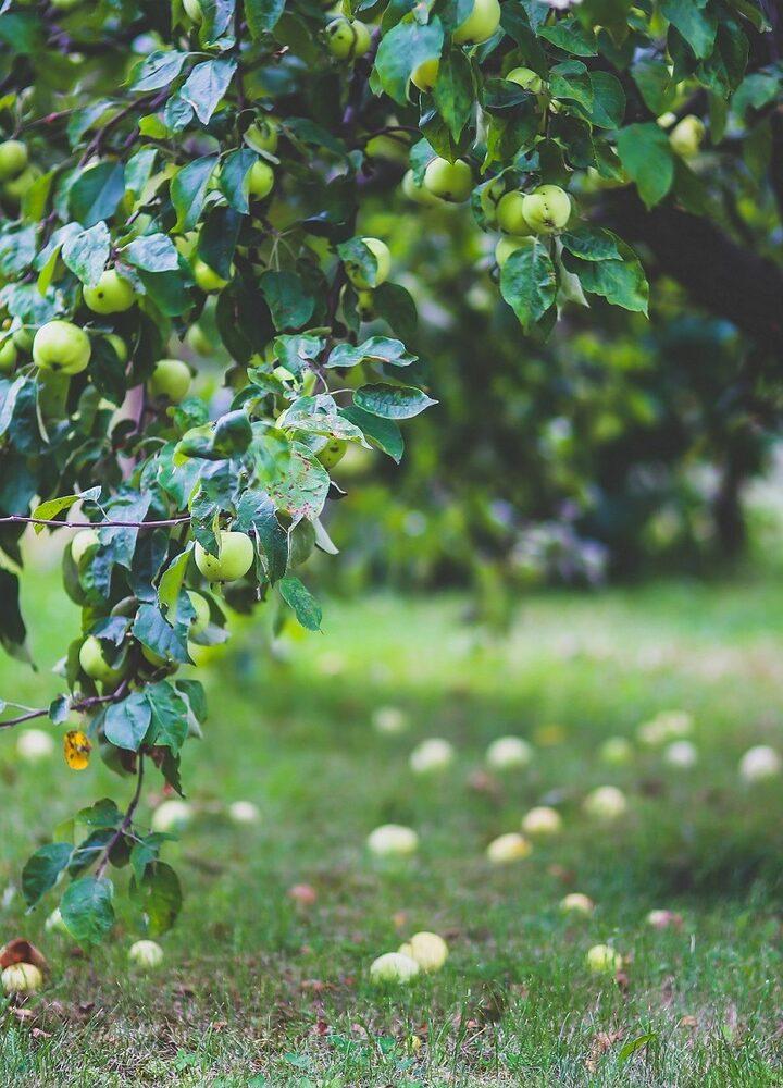 Ogród przyjemności – 5 korzyści z posiadania ogrodu