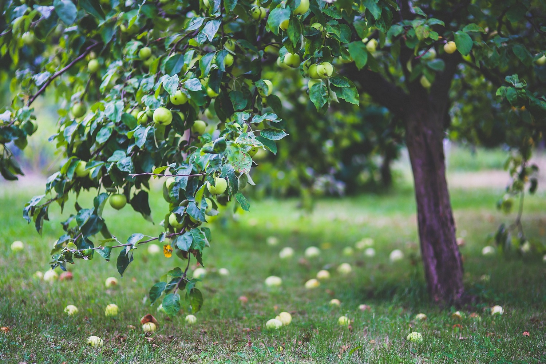 korzyści z posiadania ogrodu